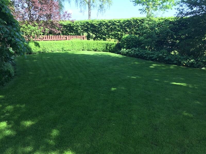 Ein schöner grüner Rasen