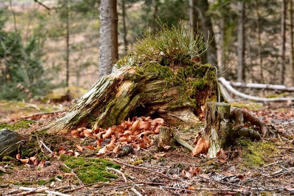Baumwurzel und Baumstumpf entfernen