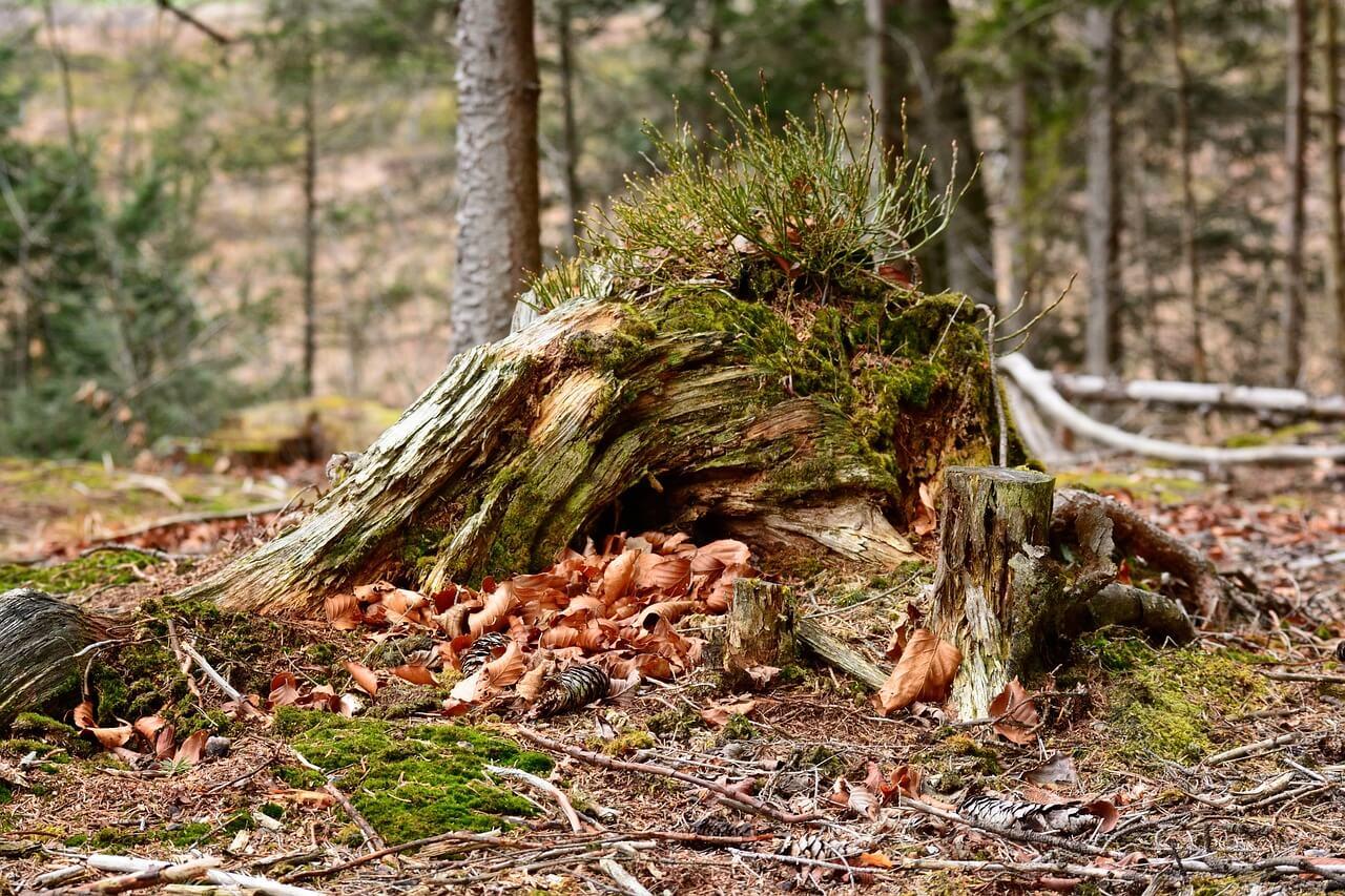 Baumwurzel Und Baumstumpf Entfernen Heimwerker Berater De