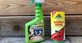 Ameisenmittel zur Bekämpfung von Ameisen