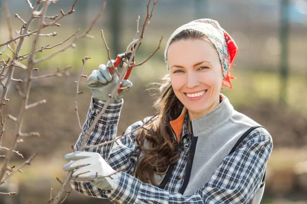 Einen Apfelbaum Richtig Schneiden Heimwerker Berater De