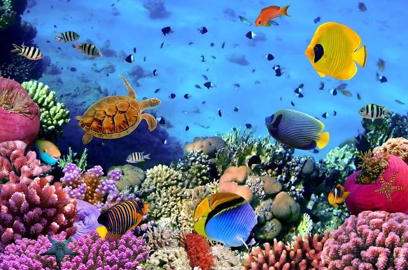 Membranpumpe fürs Aquarium