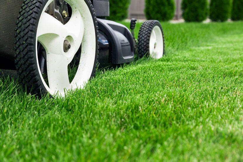 Gerade Rasenfläche wird gemäht.