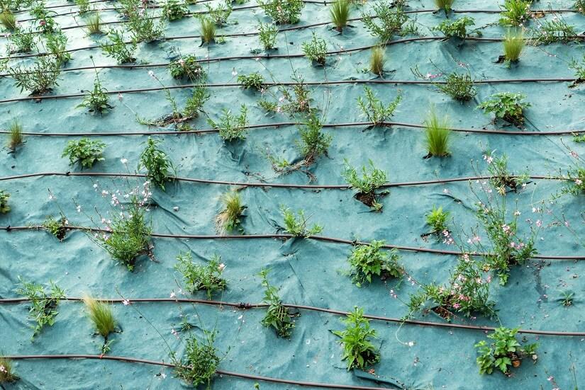 Auch in der Landwirtschaft ist der Bewässerungsschlauch wichtig