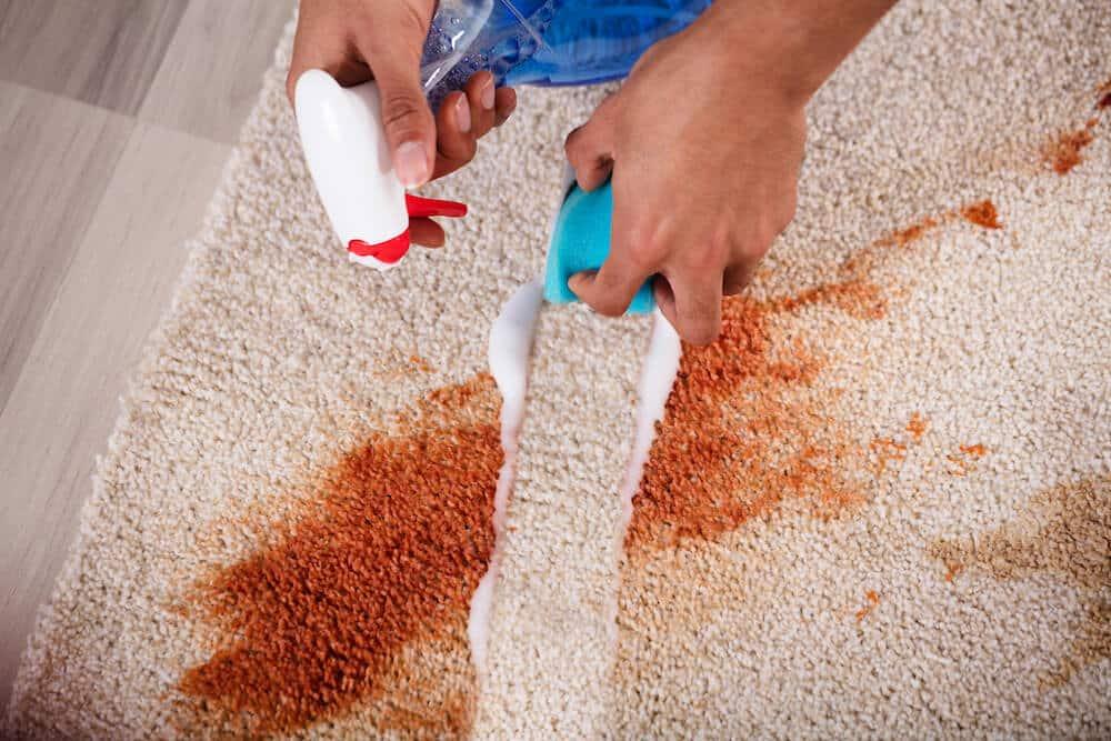 Den Teppich richtig reinigen