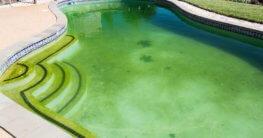 Das Poolwasser ist grün - Was tun?