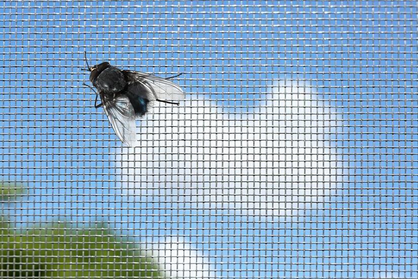 Mit der Fliegenschutztür bleiben die Fliegen draußen