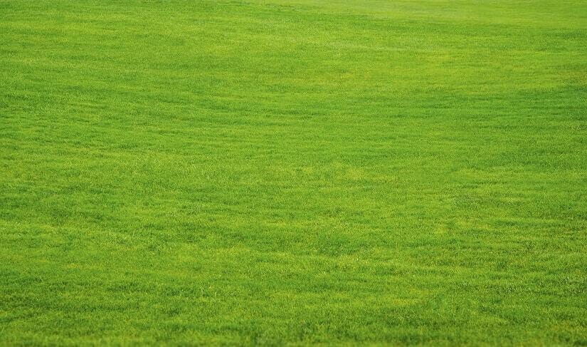 Die Rasenfräse hilft dabei den Rasen gepflegt zu halten