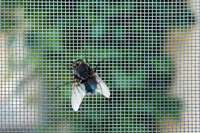 Insektenschutzrollo fürs Dachfenster: damit die Insekte draußen bleiben