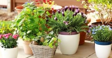 Blumentöpfe und Pflanzenbehälter